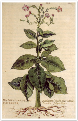 Native Tobacco