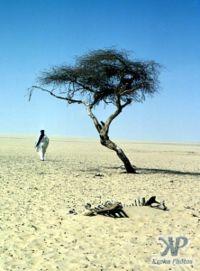 Tree_of_Tenere