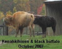 Kenahkihine & Black Baffalo