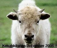 Kenahkihine 2006
